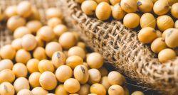 Receita das exportações do agro cresce 8% no ano, a R$ 79 bilhões, diz Cepea